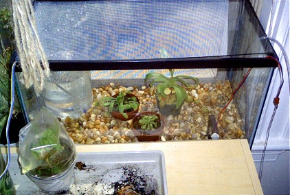 humidity-controlled terrarium for carnivorous plants